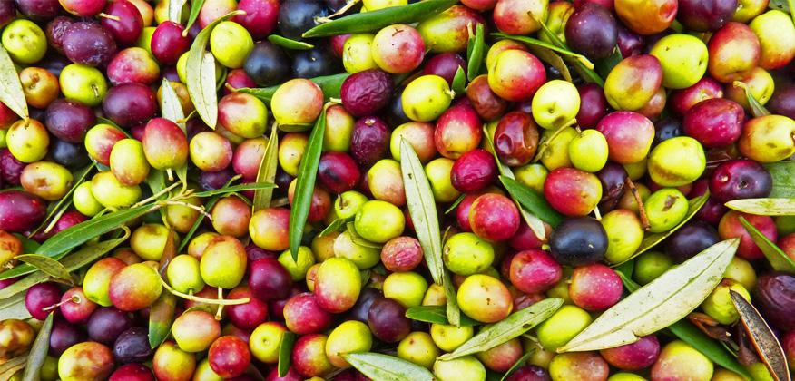 масло для волос оливковое
