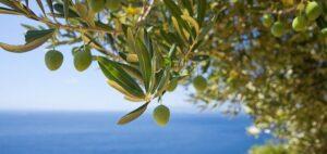 маски-для-лица-с-оливковым-маслом